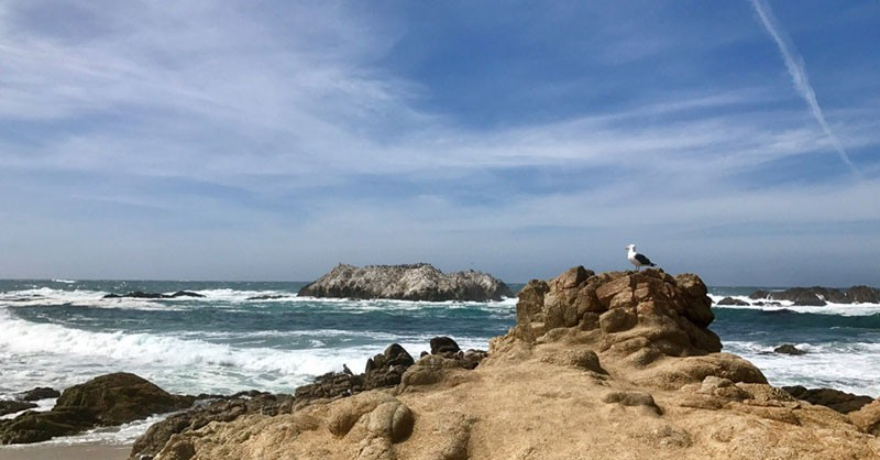 Bird Rock on 17-mile Drive Near Monterey, CA