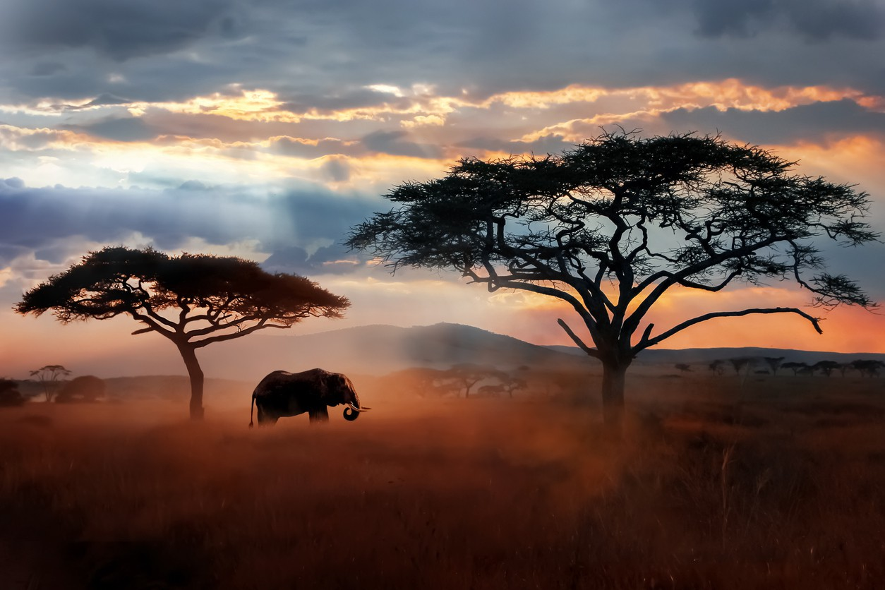 National Parks of Africa
