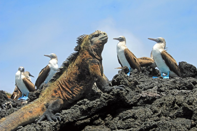 The Galapagos Islands' amazing wildlife