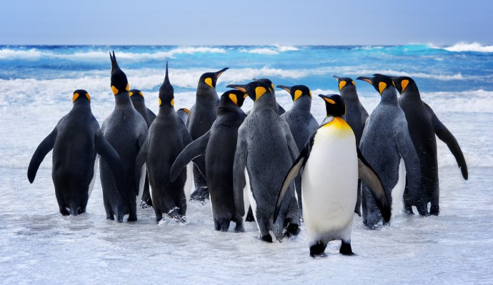 Visit Antarctica - Travel to Antarctica