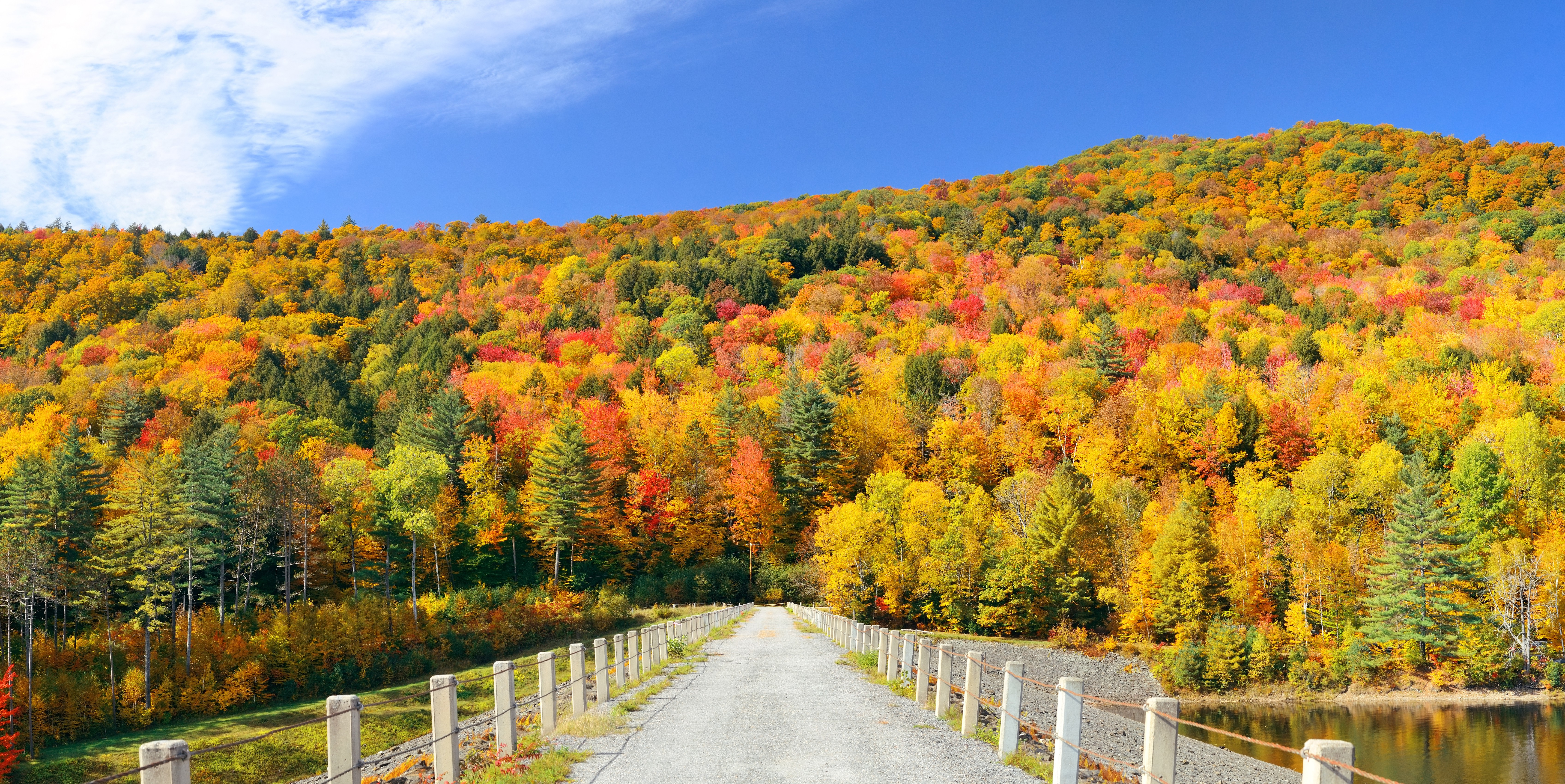 fall foliage trees mountains